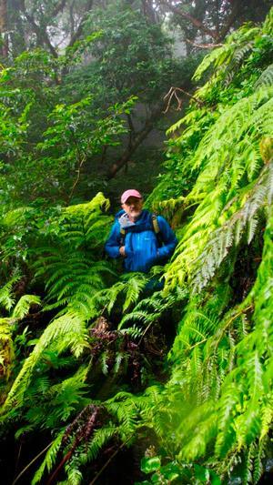 Sebas en el Bosque Pijaral. Foto: Sebastián Álvaro